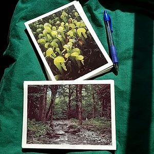 """Lot of 40 blank photo cards Pacific NW 5""""×7"""""""